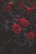 Red flowers, petals, leaves iPhone wallpaper