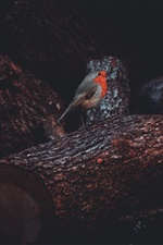 Robin bird, trunk iPhone wallpaper