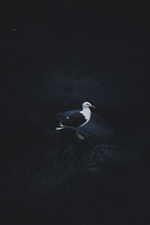 Seagull, darkness iPhone Wallpaper