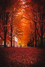 Trees, leaves, path, autumn iPhone wallpaper