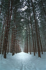Trees, snow, path, winter iPhone wallpaper