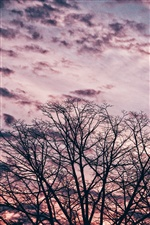 Trees, twigs, sky, sunset iPhone Wallpaper