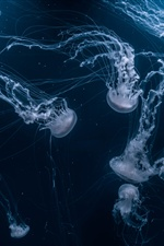 Beautiful jellyfish, underwater iPhone wallpaper