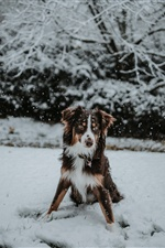 Dog in winter, snow iPhone wallpaper