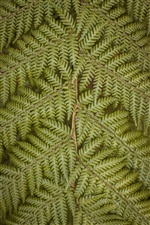 Fern leaves, twigs iPhone wallpaper