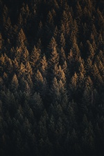 Forest, trees, autumn, top view iPhone wallpaper