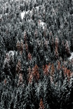 Forest, trees, snow, winter iPhone wallpaper
