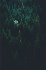 Green trees, top view iPhone wallpaper