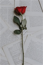 One red rose, book papers iPhone wallpaper