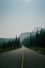 Road, trees, mountains, fog, morning iPhone wallpaper