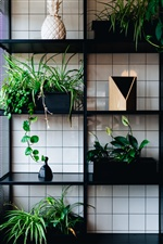 Houseplants, shelf iPhone Wallpaper