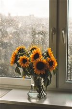 Sunflowers, windowsill iPhone wallpaper